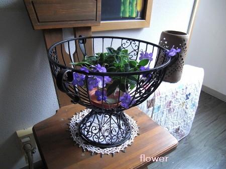 flower8.30.jpg